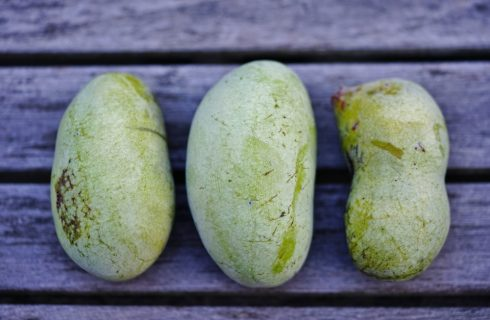 Riscoperte: 10 frutti antichi da amare