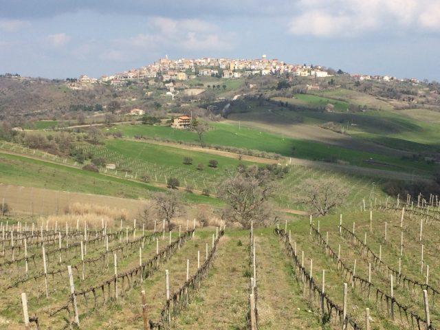 Le vigne di Tintilia