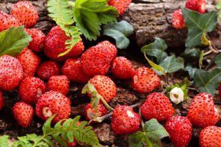 Di stagione: fragoline di bosco, usi e proprietà