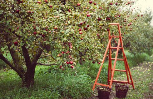 FruttaInCampo: il frutteto di Milano in cui si raccoglie la frutta dagli alberi