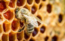 ApiAmo Genova: scoprire il valore delle api