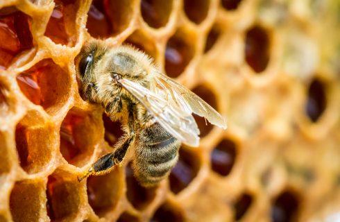 ApiAmo: a Genova per scoprire il valore del miele e delle api