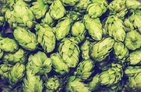 Non solo birra: 8 gustose ricette con il luppolo