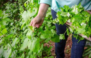 Foraging all'italiana: 9 erbe spontanee da mettere nel piatto