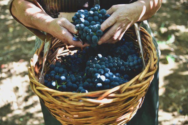 cantina-tollo-vini