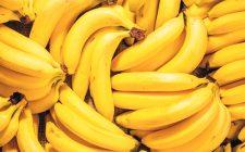 Banane a rischio estinzione