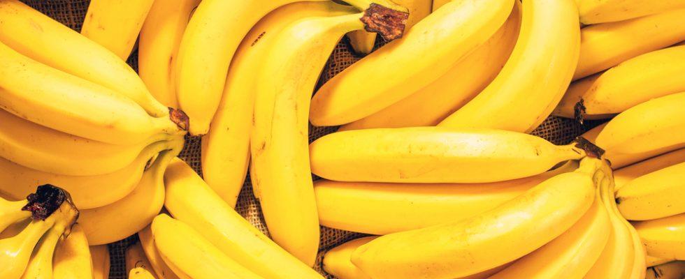 Banane a rischio estinzione: i ricercatori lanciano l'allarme