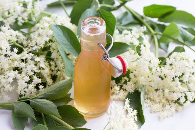 fiori-di-sambuco-6