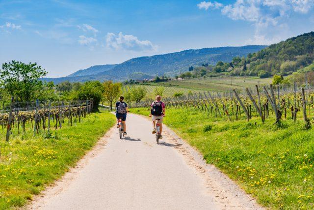 in bicicletta tra le vigne
