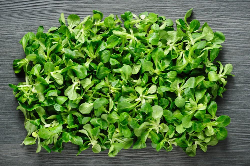 Come usare la valeriana in cucina agrodolce