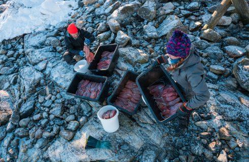 Imparare dagli italiani: nell'Artico si produce la bottarga di merluzzo