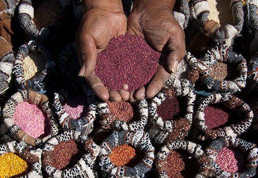 quinoa-sito-peru