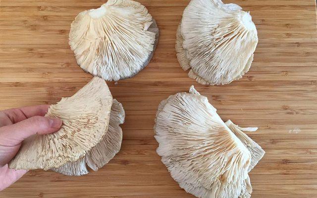 cotolette-di-funghi-farcite-1_ok