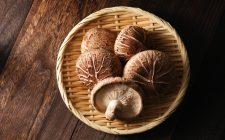 I preziosi shiitake arrivano anche in Italia
