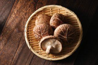 Dal Giappone i funghi shiitake arrivano anche in Italia