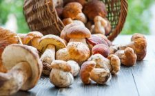 How to: pulire i funghi porcini