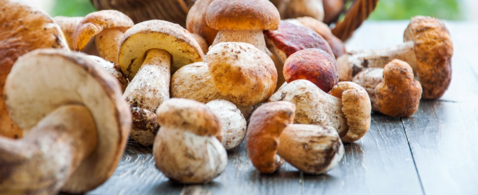 How to: come pulire i funghi porcini