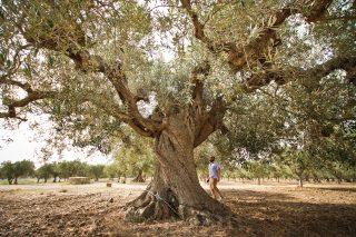 Incuso: ridisegnare l'olio extravergine d'oliva