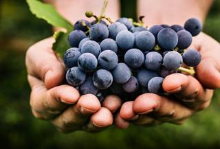 6 modi insoliti per gustare l'uva, regina dell'autunno