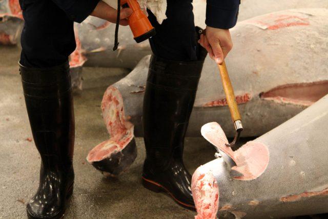 asta del tonno