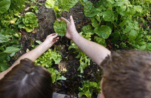Perché dovremmo nutrirci in modo sostenibile