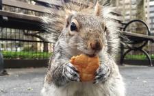Gli animali diventati meme del food