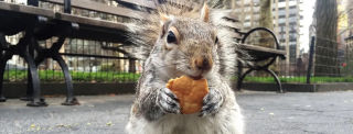 Dal Pizza Rat in poi: 4 animali diventati meme del food