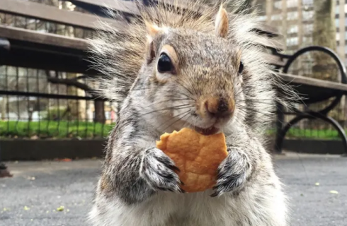 Dal Pizza Rat in poi: 4 animali diventati meme del food