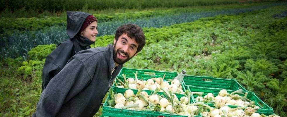 WWOOF: vitto e alloggio in cambio di lavoro in fattoria