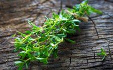 Santoreggia: erba d'amore e buona cucina