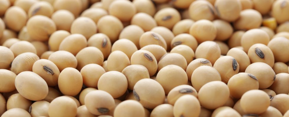 8 cose che forse non sapevi sulla soia