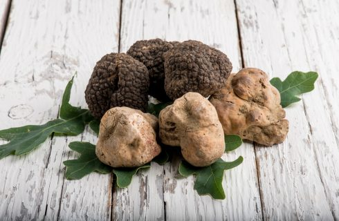 Venite a celebrare il Tartufo ad Acqualagna