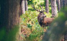 Tradotto per voi: il dilemma della caccia