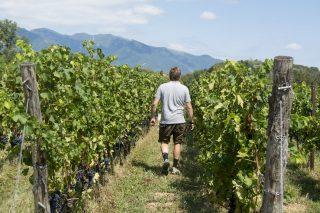 Teruar: la prima fiera di vino etico a Scicli
