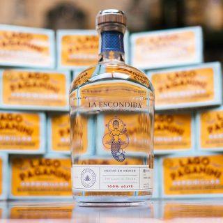 Mezcal: il distillato del momento che i bartender amano