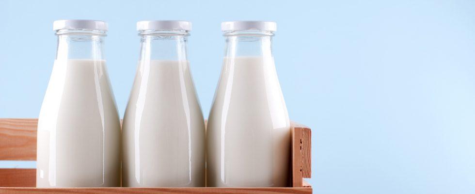 Latte straniero nella mozzarella di bufala DOP: un test del Cnr lo smaschera