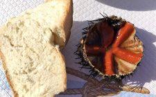 Puglia: mangiare crudo tra Bari e Savelletri