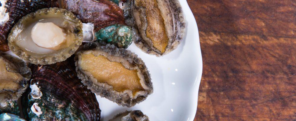 Abalone: conoscere il mollusco in 5 piatti