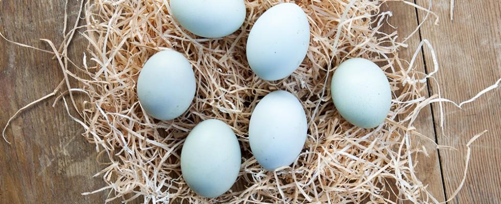 Perché tutti vanno pazzi per le uova blu?