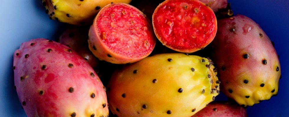 Fichi d'India: sapore, stagione e come usarli in cucina