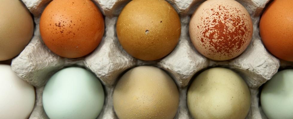 Uova: una guida per capire il colore e sceglierle