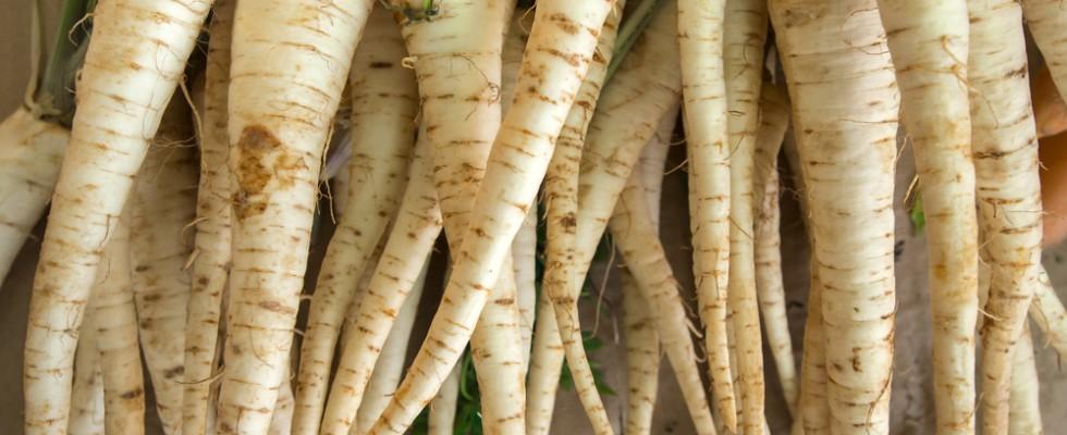 Le radici amare di Soncino sono un concentrato di nutrienti