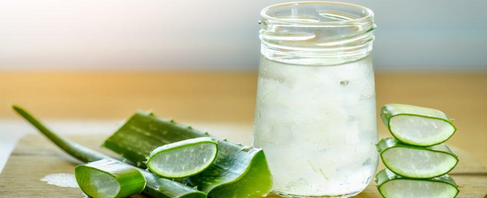 Succo di aloe vera, il drink dell'estate (e come farlo a casa)