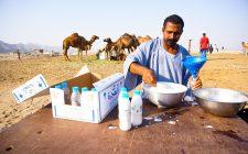 Perché tutti vogliono il latte di cammella