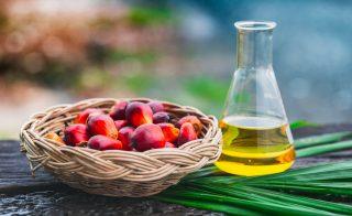 Olio di palma: fa davvero male?