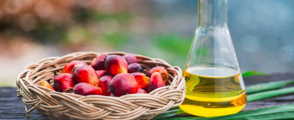 Miti da sfatare: l'olio di palma fa male?
