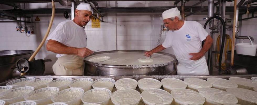 Orgoglio caseario: i formaggi DOP laziali