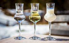 Autunno: 10 grappe da gustare in Trentino