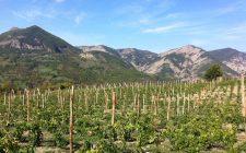 Perché bere i vini della Val Borbera
