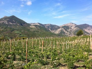 Perché dovreste bere i vini della Val Borbera